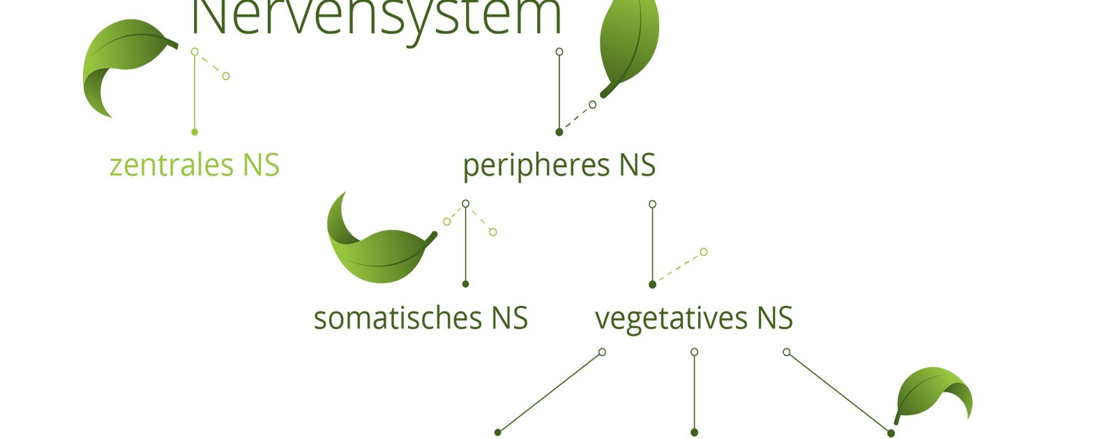 Aufbau des menschlichen Nervensystems