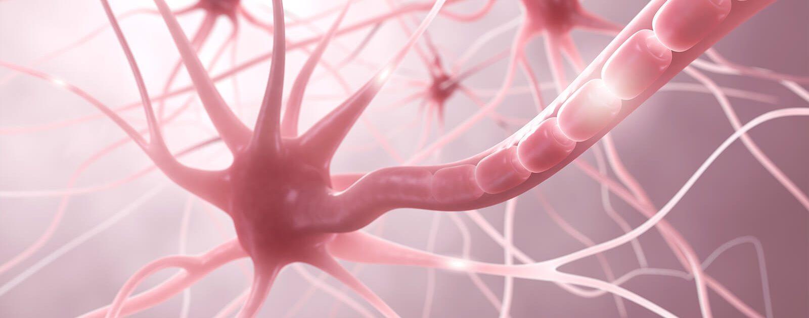 Abbildung einer Nervenzelle, die bei einer Nervenentzündung Schmerzen verursacht.